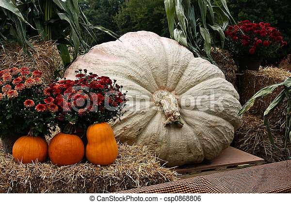 Giant Pumpkin - csp0868806