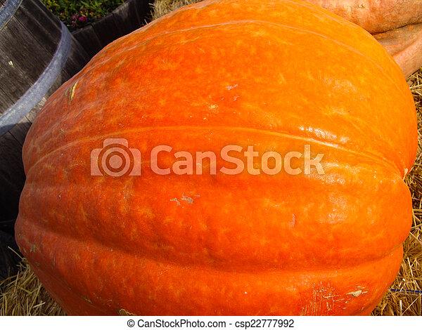 Giant Pumpkin - csp22777992