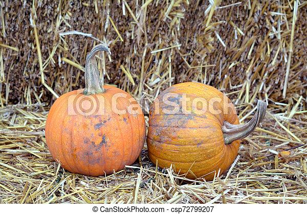giant pumpkin - csp72799207