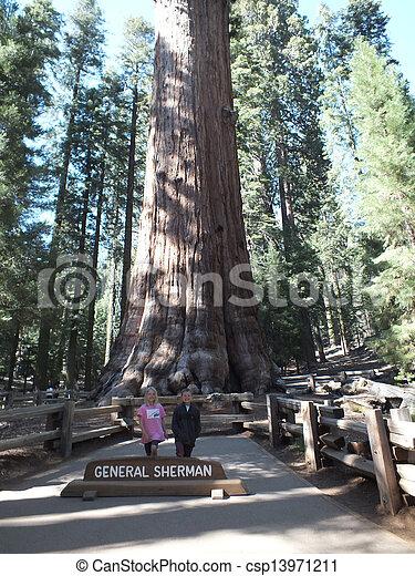 Giant Redwoods - csp13971211