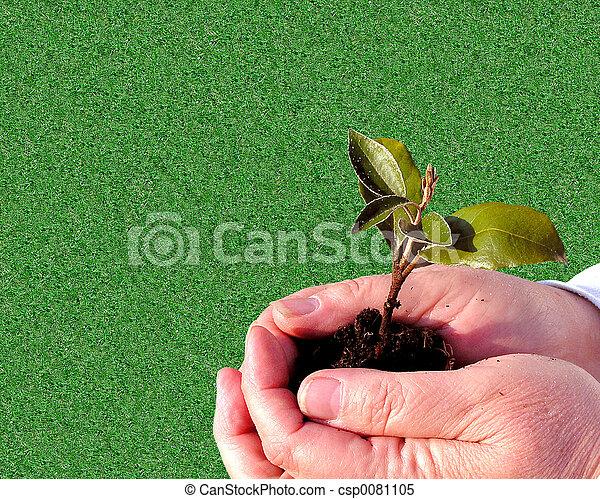 giardinaggio, cura - csp0081105