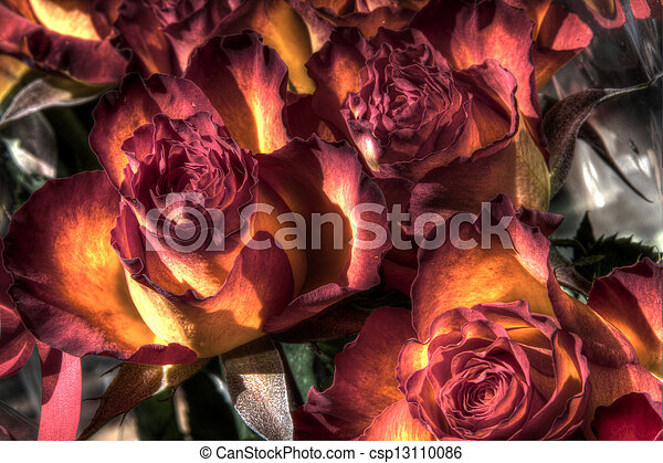 Gift wrapped roses - csp13110086