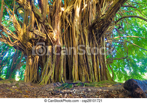 Árbol baniano gigante - csp28101721