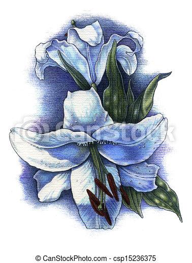 Gigli Clip Art Csp15236375