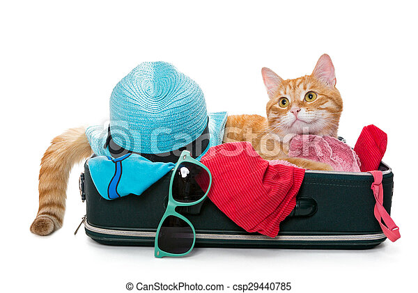 Ginger cat lay on a suitcase - csp29440785