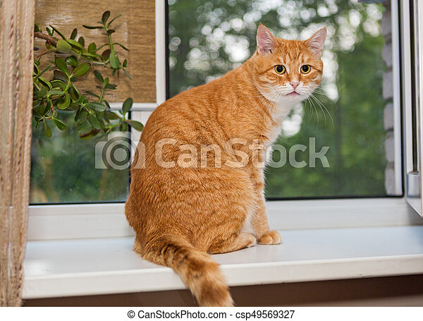 Ginger cat on the window basking in the sun