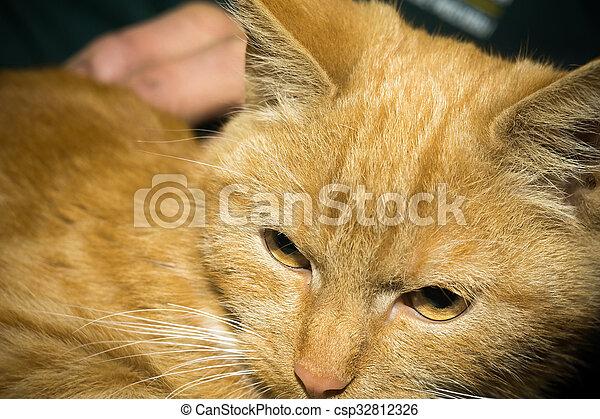 Cute ginger cat portrait, close up of a cats head.