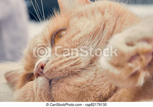 ginger cat with a surprised face. close up - csp82179130