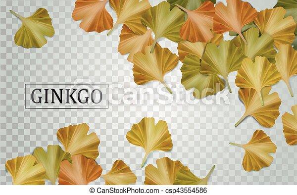 Elementos de biloba de Ginkgo - csp43554586