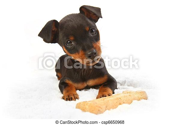 Giocattolo doberman cane miniatura pincher cucciolo for Pincher cucciolo