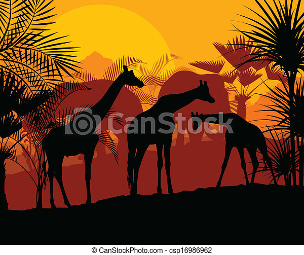 girafe, vecteur, coucher soleil, fond - csp16986962