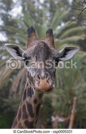 Giraffe 2 - csp0005331