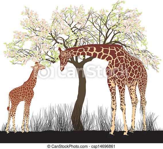 Giraffe and tree - csp14696861