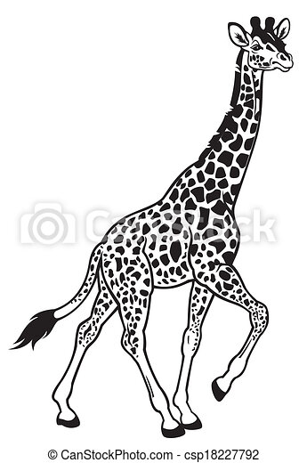 Black And White Giraffe Pictures