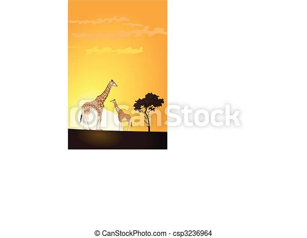Giraffe - csp3236964