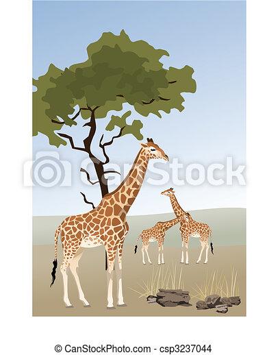 Giraffe - csp3237044