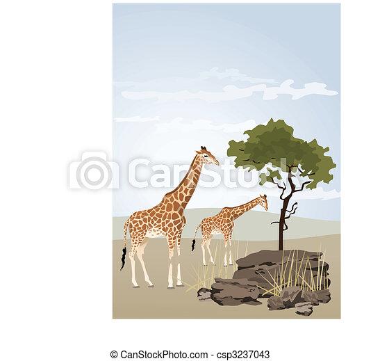 Giraffe - csp3237043