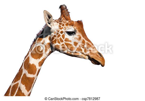 Giraffe head - csp7812987