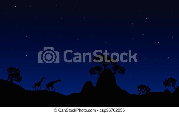 Silhouette der Giraffe in der Nacht - csp36702256