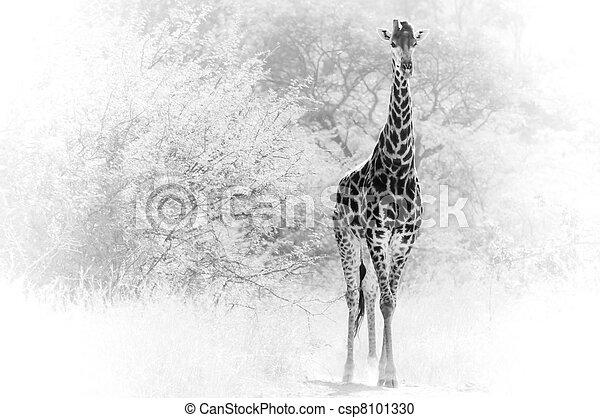 Giraffe Solitaire - csp8101330