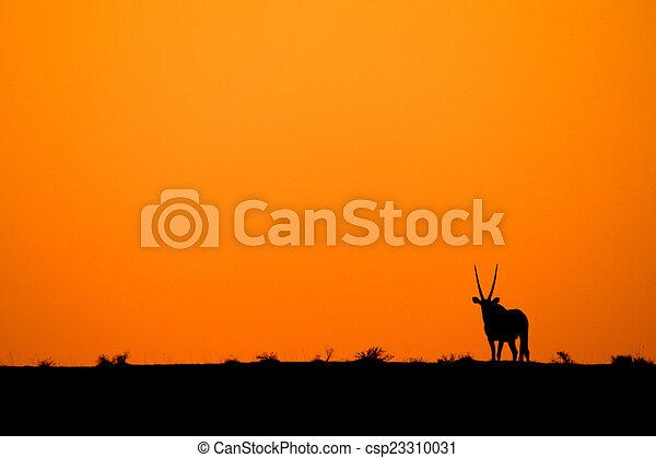 Giraffe - csp23310031
