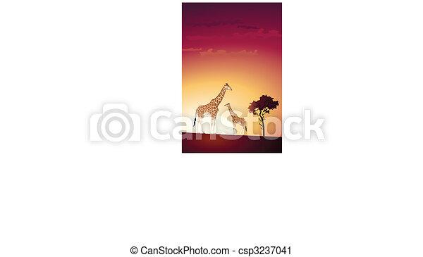 Giraffe - csp3237041
