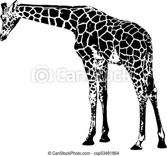 giraffe vector illustration giraffe vector graphics isolated on rh canstockphoto com giraffe vector free giraffe vector free download
