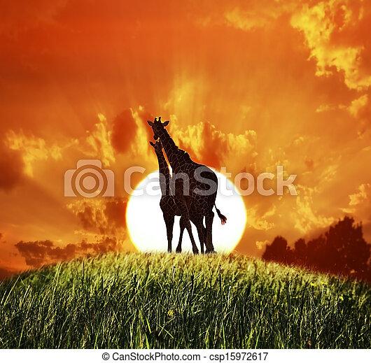 Giraffes At Sunset - csp15972617