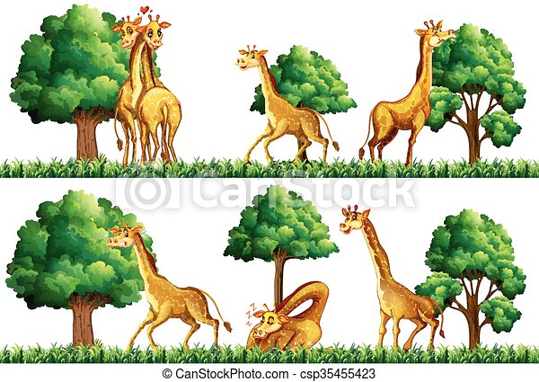 Giraffes resting in the field - csp35455423