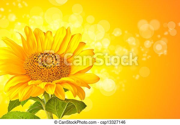 girasole, fiore, astratto, dettaglio, fondo, baluginante - csp13327146