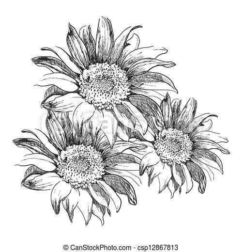Popolare Schizzo, girasoli, sfondo bianco clip art vettoriale - Cerca  AV57
