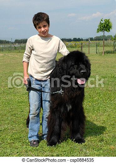 big newfoundland dog
