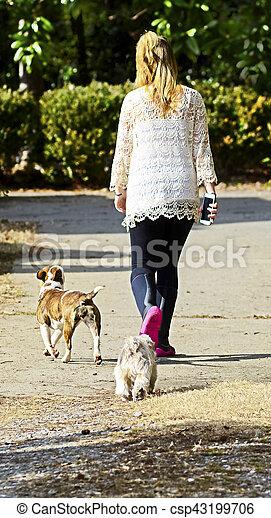 Girl Walking Dogs Home - csp43199706