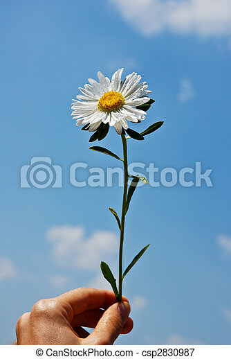 giving a flower