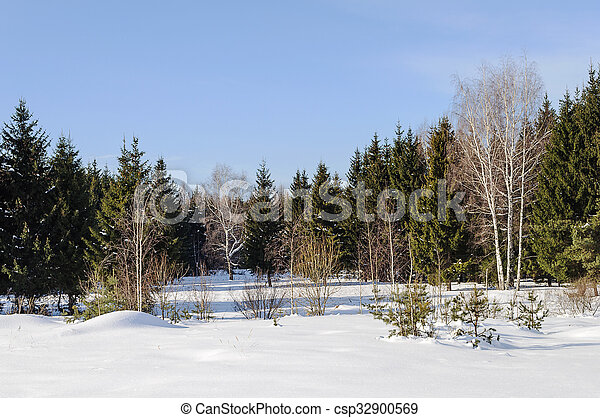 Glade in a winter forest - csp32900569