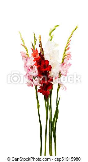 Gladiolus flower on white background gladiolus flower csp51315980 mightylinksfo