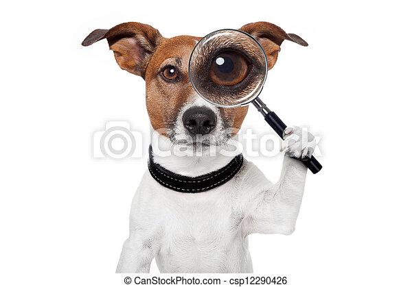 glas, dog, vergroten, grondig - csp12290426