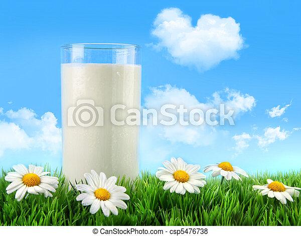 glas, gras, gänseblümchen, milch - csp5476738