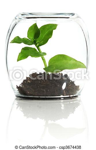 glas pflanze gesch tzt bilder fotografien und foto clipart suchen csp3674438. Black Bedroom Furniture Sets. Home Design Ideas