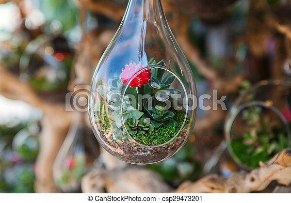 Glass Terrarium With Succulent Plant Miniature Cactus Succulent