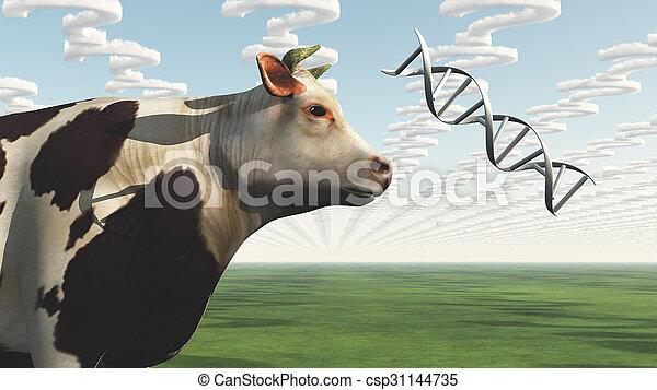 GMO Cow Question - csp31144735