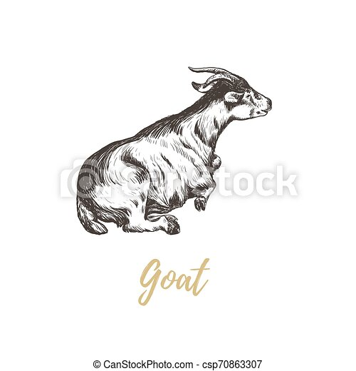 Goat hand drawing. Goat skech. - csp70863307