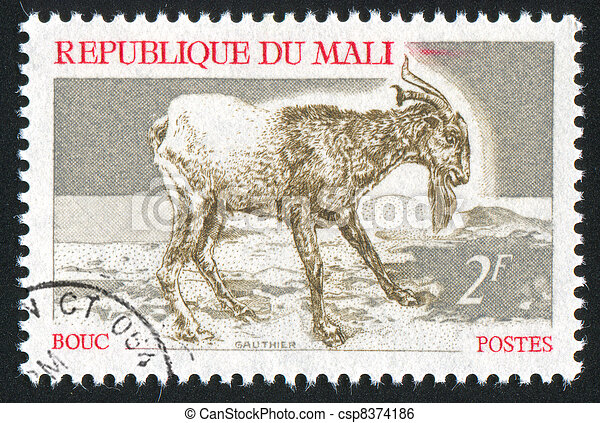 Goat - csp8374186