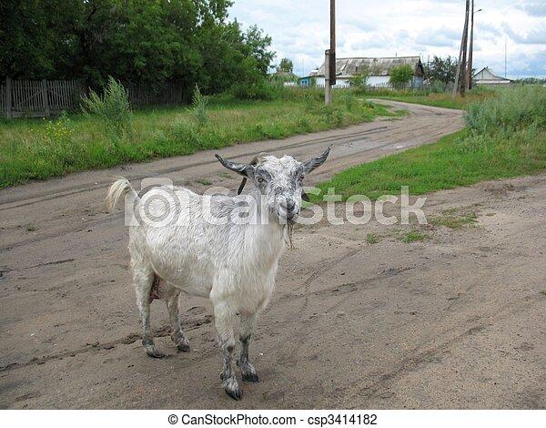 goat - csp3414182