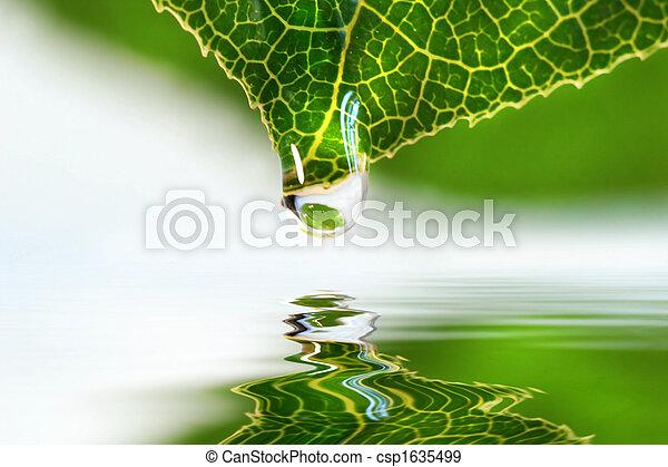 gocciolina acqua, sopra, foglia - csp1635499
