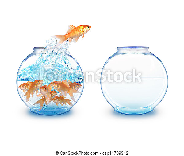 Gold Fish Jumping to Empty Bowl - csp11709312