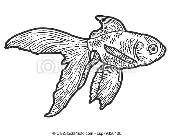 Gold fish. T-shirt apparel print design. Scratch board imitation. Black and white hand drawn image. - csp79320400
