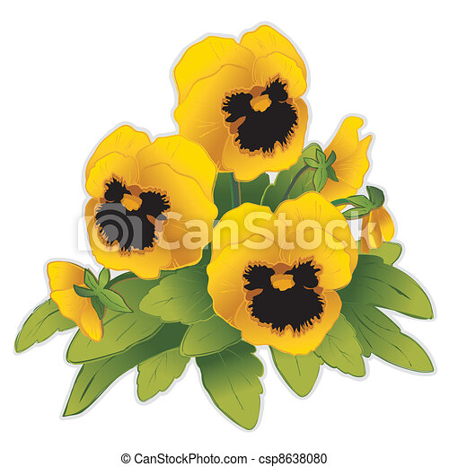 gold pansy flowers viola tricolor hortensis isolated on vector rh canstockphoto com purple pansy clip art pansy clip art free