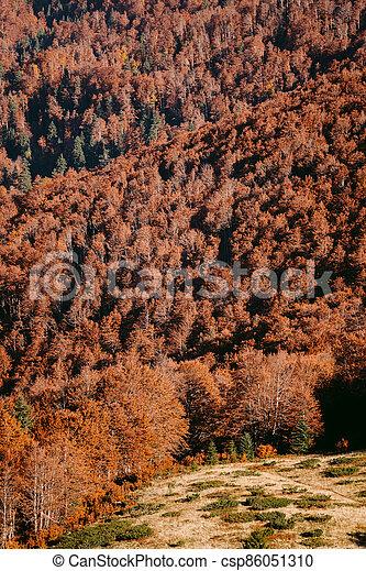 golden autumn forest scenery - csp86051310