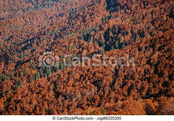golden autumn forest scenery - csp86335300